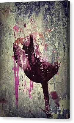 A Bit Of Tulip Canvas Print by Jutta Maria Pusl