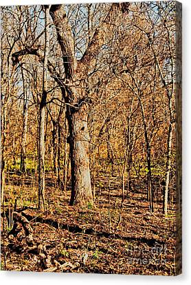 A Bottomland Pecan Canvas Print by Gary Richards