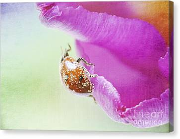A Breath Of Spring Canvas Print by Angela Doelling AD DESIGN Photo and PhotoArt