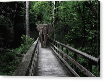 A Bull On The Boardwalk Canvas Print by Tom Mc Nemar