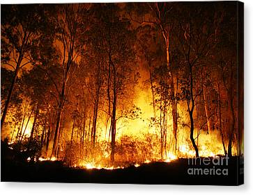 A Bushfire Burning Orange And Red At Night. Canvas Print by Caio Caldas
