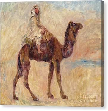 A Camel Canvas Print by Pierre Auguste Renoir