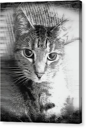 A Cat Illustration Canvas Print by Tom Gowanlock