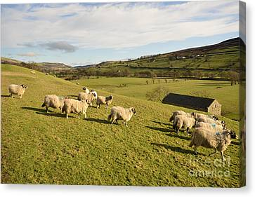 A Country Scene Canvas Print by Stephen Smith