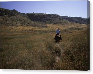A Cowboy Looks For His Herd Canvas Print by Taylor S. Kennedy