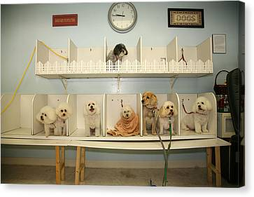 A Day At The Doggie Day Spa Canvas Print by Michael Ledray
