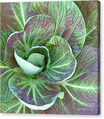 A Floral I Canvas Print by Gary Everson