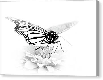 A Light Touch - Butterfly Canvas Print by Nikolyn McDonald