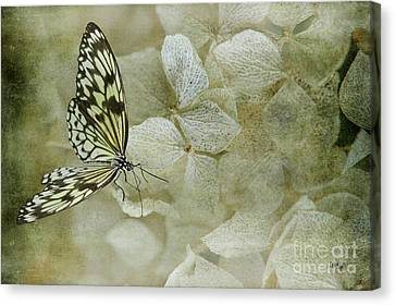 A Lighter Touch Canvas Print by Lois Bryan