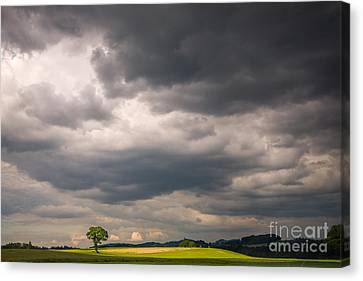A Lone Tree Under A Stormy Sky Canvas Print by Ning Mosberger-Tang