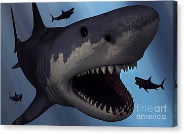 A Megalodon Shark From The Cenozoic Era Canvas Print by Mark Stevenson