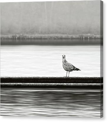 A Moment In Time Canvas Print by Wim Lanclus