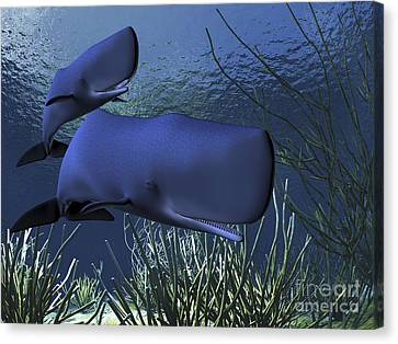 A Mother Sperm Whale Escorts Her Calf Canvas Print by Corey Ford