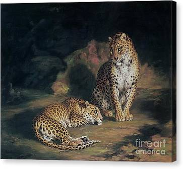 A Pair Of Leopards Canvas Print by William Huggins