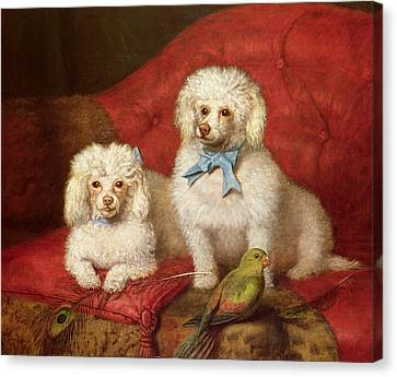 A Pair Of Poodles Canvas Print by English School