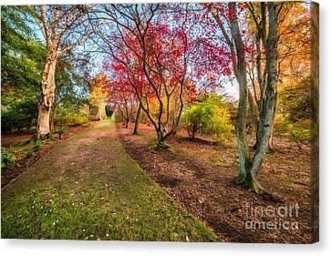 A Path Into Autumn Canvas Print by Adrian Evans