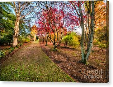 A Path Into Autumn Canvas Print by Adrian Evans