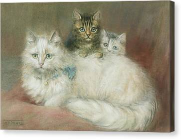 A Persian Cat And Her Kittens Canvas Print by Maud D Heaps