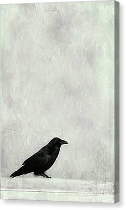 A Raven Canvas Print by Priska Wettstein