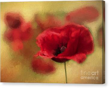 A Red Poppy Canvas Print by Darren Fisher