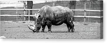 A Rhinoceros Canvas Print by Amitabh Dayal