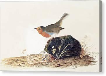 A Robin Perched On A Mossy Stone Canvas Print by John James Audubon