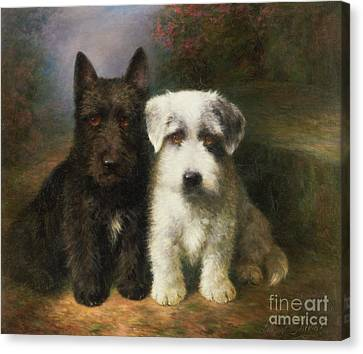 A Scottish And A Sealyham Terrier Canvas Print by Lilian Cheviot