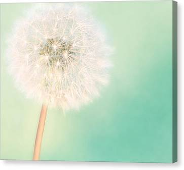 A Single Wish II Canvas Print by Amy Tyler