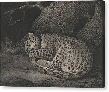 A Sleeping Leopard Canvas Print by George Stubbs