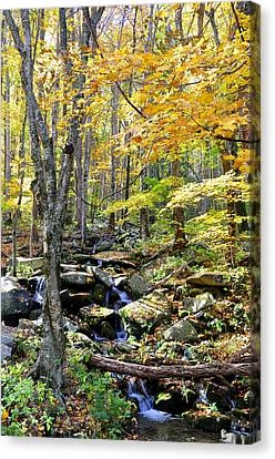A Smokey Mountain Stream  Canvas Print by Brittany H