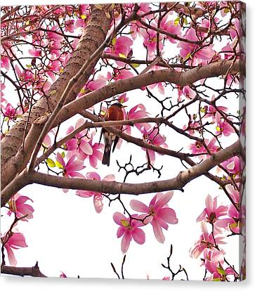 A Songbird In The Magnolia Tree - Square Canvas Print by Rona Black
