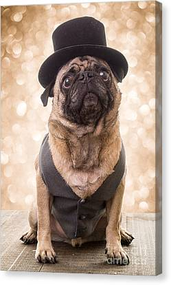 A Star Is Born - Dog Groom Canvas Print by Edward Fielding