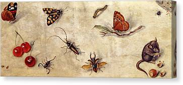 A Study Of Various Insects, Fruit And Animals Canvas Print by Jan Van Kessel the Elder