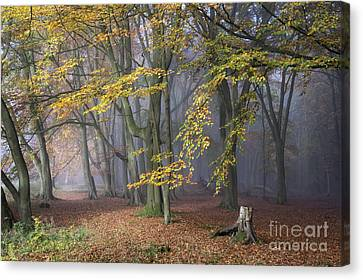 A Tale Of Two Paths Canvas Print by Tim Gainey