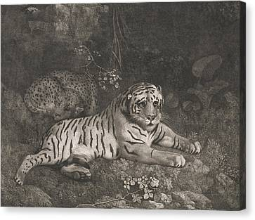 A Tiger And A Sleeping Leopard Canvas Print by George Stubbs
