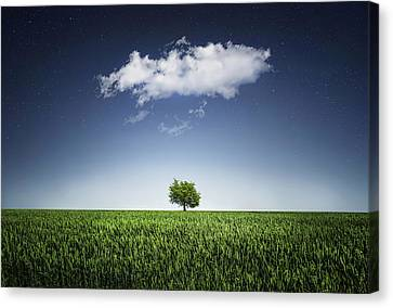 A Tree Covered With Cloud Canvas Print by Bess Hamiti