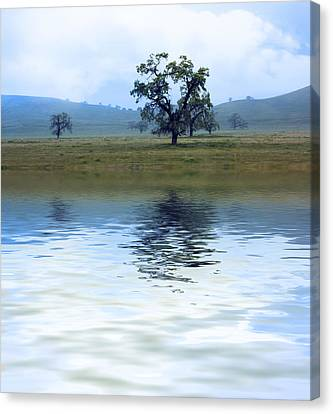 A Trees  Reflection Canvas Print by Gravityx9   Designs