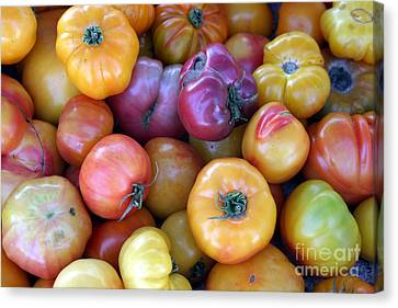 A Trip Through The Farmers Market Featuring Heirloom Tomatoes. Canvas Print by Michael Ledray