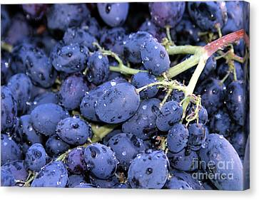 A Trip Through The Farmers Market Featuring Purple Grapes. Canvas Print by Michael Ledray