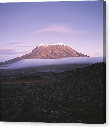 A View Of Snow-capped Mount Kilimanjaro Canvas Print by David Pluth