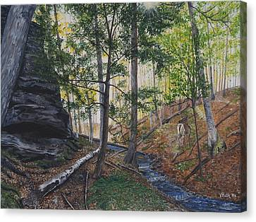 A Walk In The Woods Canvas Print by Vicky Path