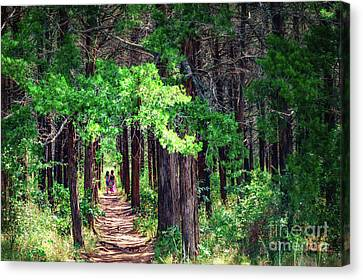 A Walk Into The Forest Canvas Print by Tamyra Ayles