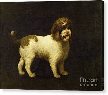 A Water Spaniel Canvas Print by George Stubbs