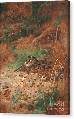 A Woodcock And Chick In Undergrowth Canvas Print by Archibald Thorburn