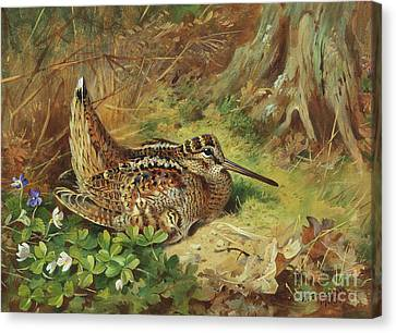 A Woodcock And Chicks Canvas Print by Archibald Thorburn