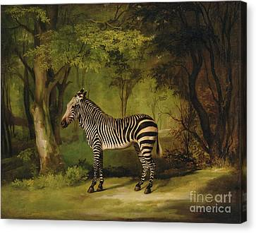 A Zebra Canvas Print by George Stubbs