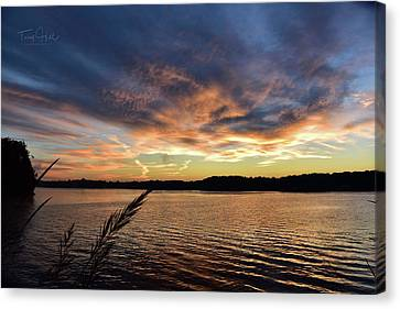 Abbotts Creek 2 Canvas Print by Tony Hill