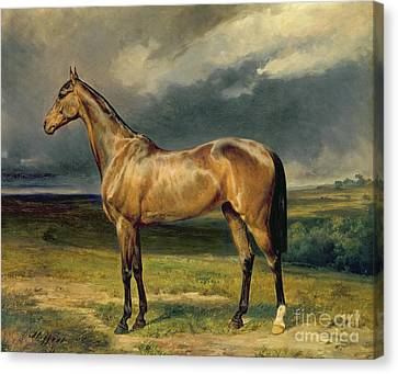 Abdul Medschid The Chestnut Arab Horse Canvas Print by Carl Constantin Steffeck
