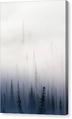 Above Them All Canvas Print by Mike  Dawson