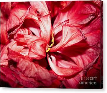 Abstract Flower Canvas Print by Tony Cordoza